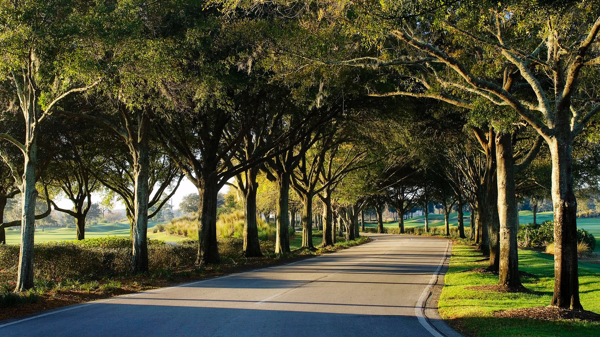 tree lined road at the villas of grand cypress